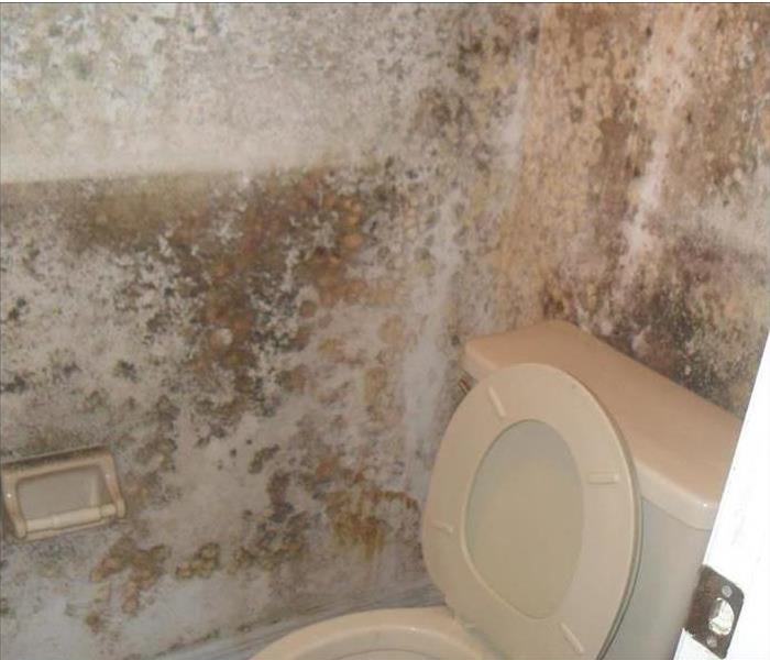 Mold from untreated water damage.